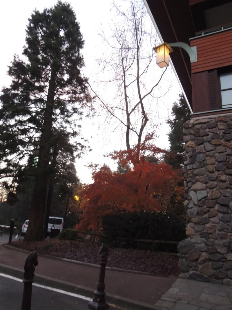 Séjour au Sequoia Lodge - Du lundi 9 au Mercredi 11 décembre 2O13 - Page 5 Dscn5611