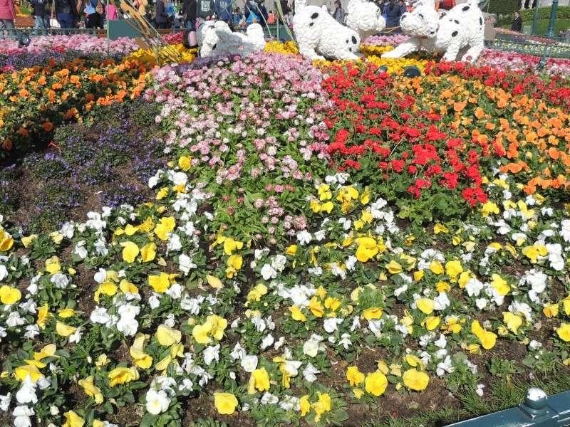 Festival du printemps 2014 (Disneyland Park) - Page 13 Dscn7256