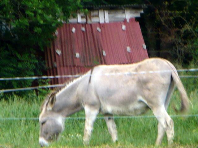 Kinderette au pays du Roquefort P1090316