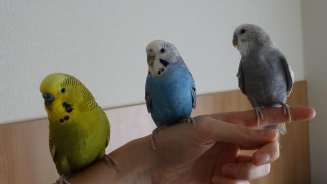 Lulu, Kawet et Otis... Dsc00216