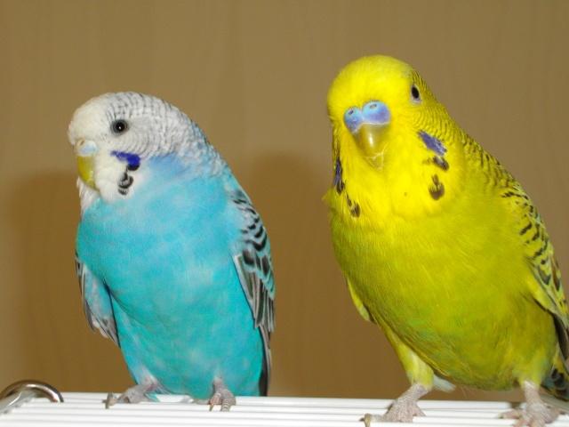 Lulu, Kawet et Otis... Imgp1110