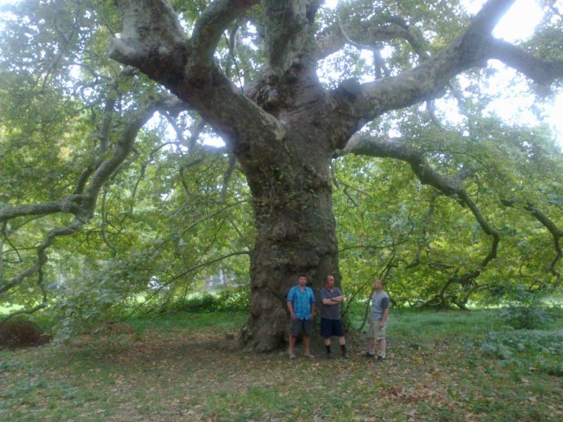 Objet : Abattage d'un arbre géant... spectaculaire !!! 11092010