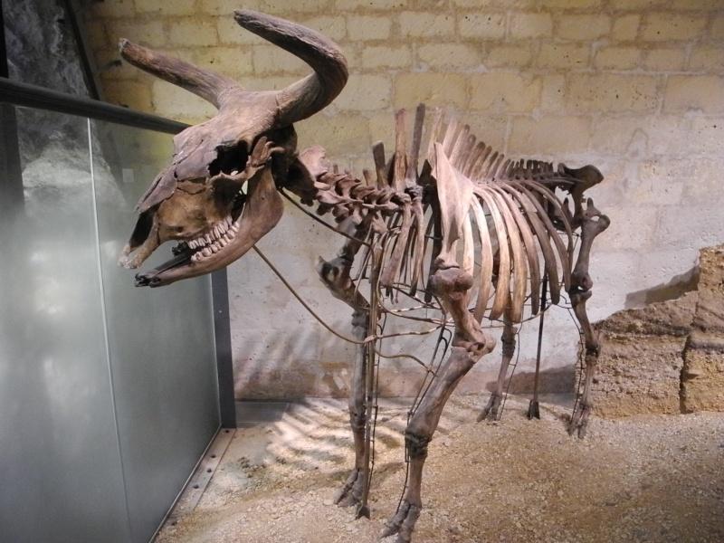 Musée d'Angoulême Dscn7911