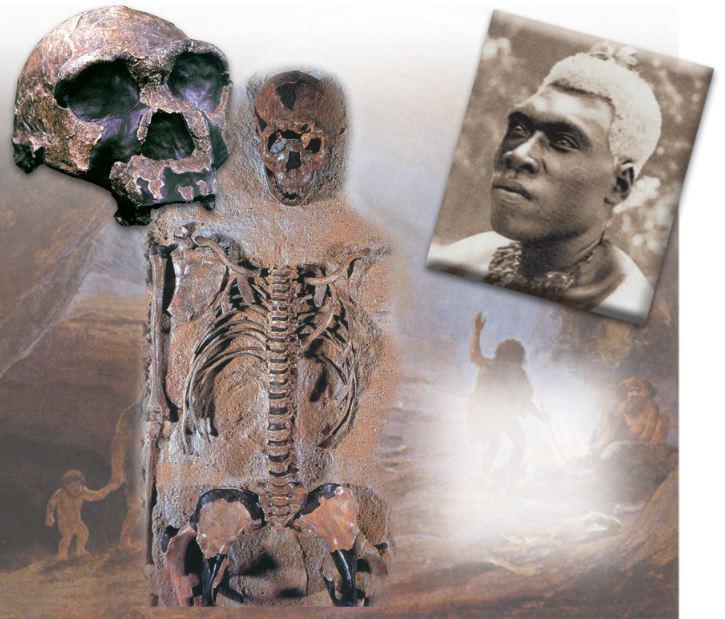 l'image de l'homme préhistorique - Page 8 Homo_e10