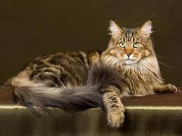 Le chat de Marie-Antoinette Boudoi46