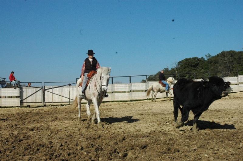 Bétail de race Corse dans le Gard 15107110