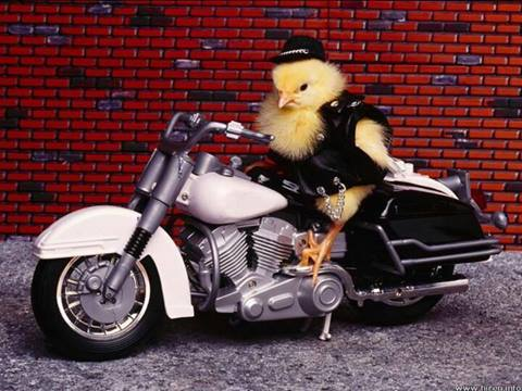Humour en image du Forum Passion-Harley  ... - Page 39 10303310