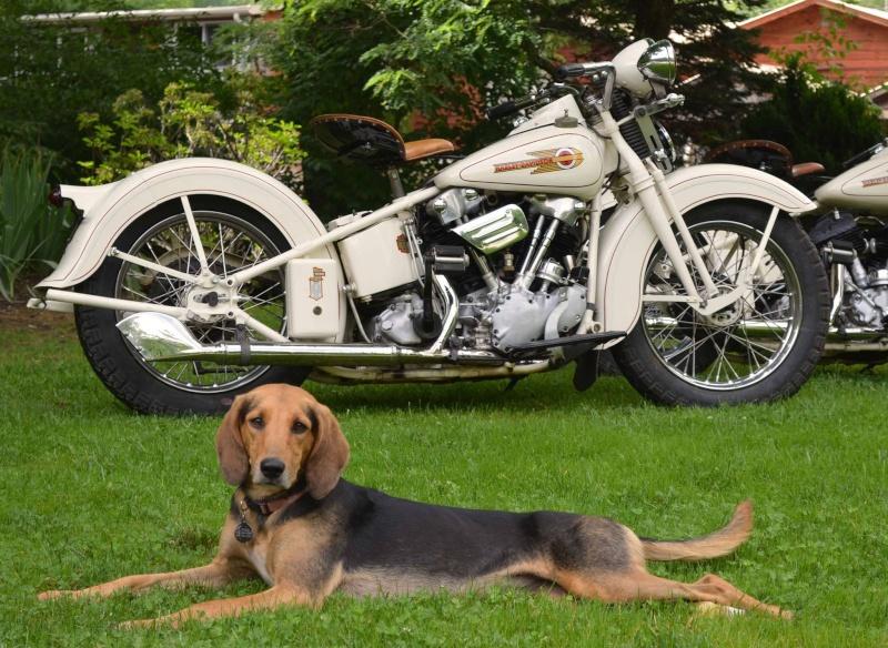 Les vieilles Harley....(ante 84) par Forum Passion-Harley - Page 4 13977610