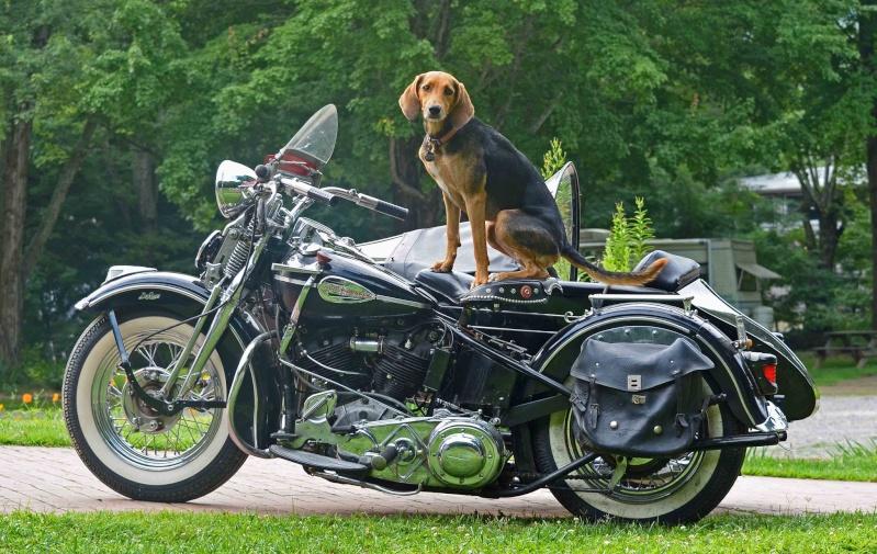 Les vieilles Harley....(ante 84) par Forum Passion-Harley - Page 5 14896110