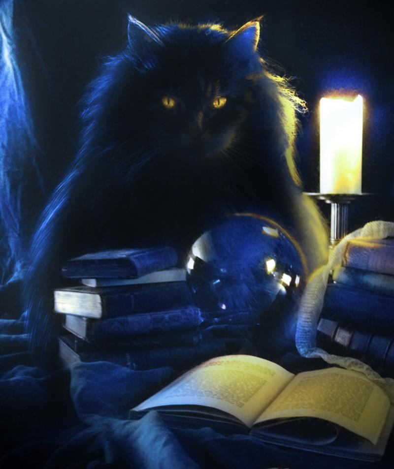Chat noir et la sorcellerie  Chat_s10