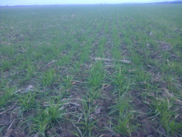 semis de blé 2013-2014 - Page 20 Img-2109