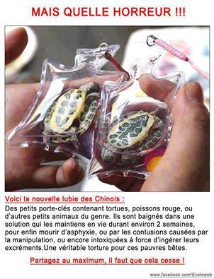 Chine : des tortues vivante en porte-clés Chine10