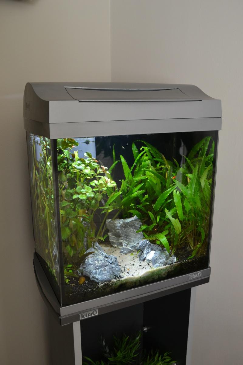Remplacement éclairage Tetra AquaArt par LED Blau Aquaristic Dsc_0012