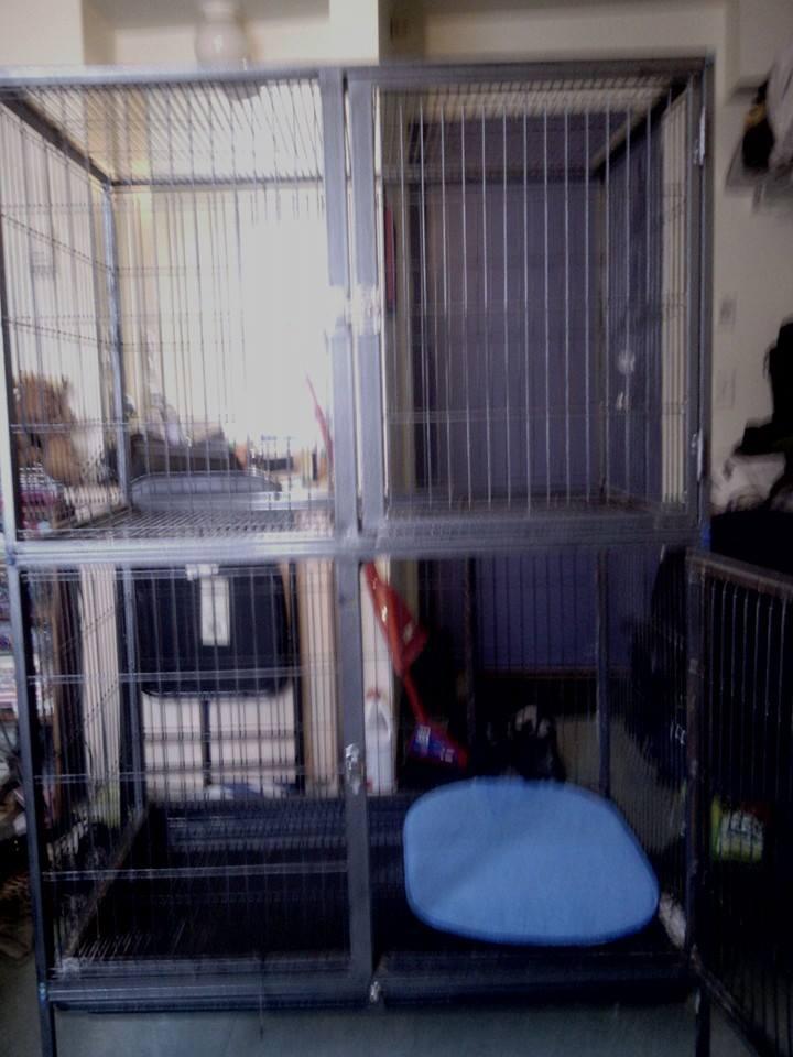 Cherche modèle de ma cage 10152410