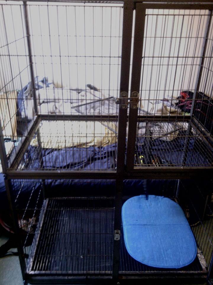 Cherche modèle de ma cage 10171210