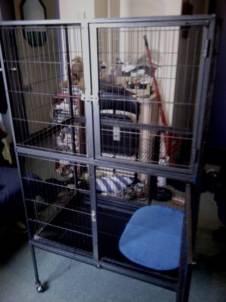 Cherche modèle de ma cage 15090910