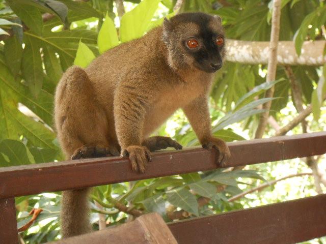 Photos séjour à Mayotte Dscn2910