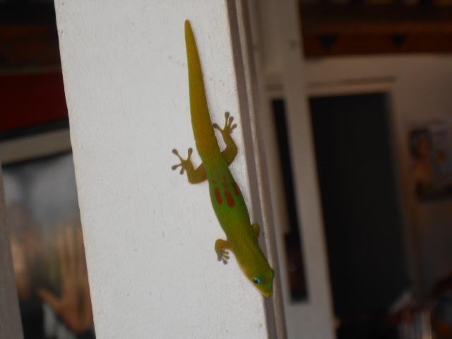 Photos séjour à Mayotte Dscn2911