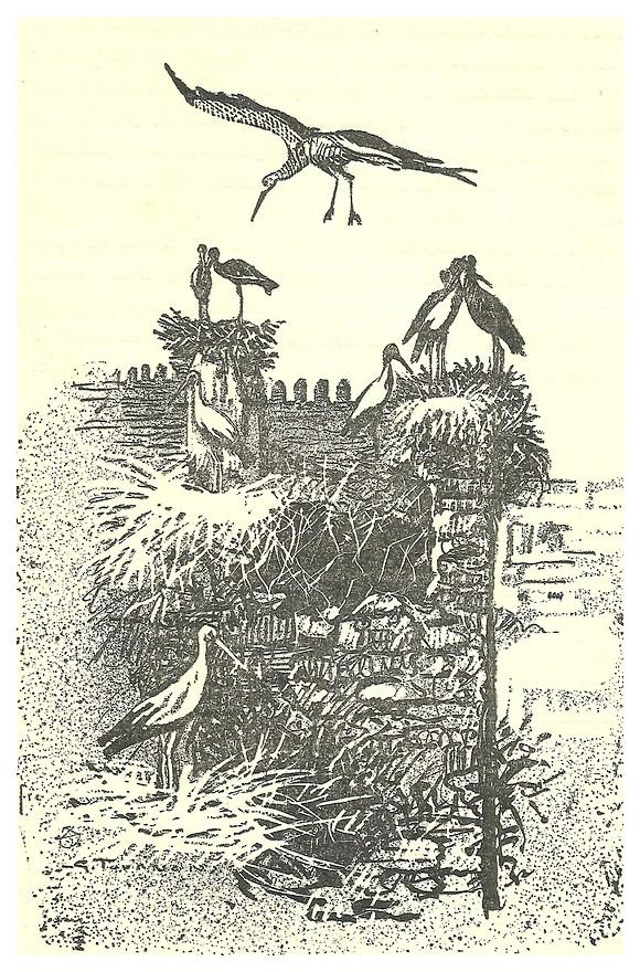 Armand MEGGLE : LE MAROC, Collection des Terres françaises, Dessins de G. TOURNON, 1931. Fascan21
