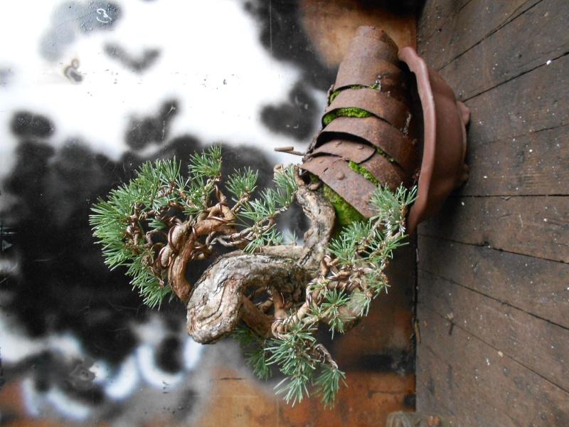 Knot pine style - Page 6 Dscn0613