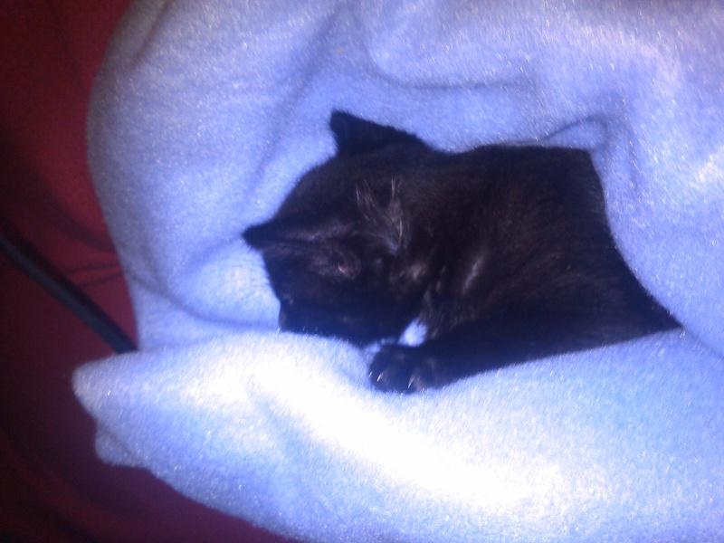 Mah kitty cat Luna4213