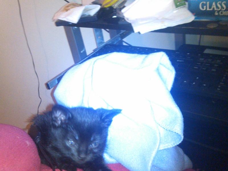 Mah kitty cat Luna_412