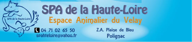 WASH - x braque/epagneul 5 ans - Spa de la Haute Loire à Polignac (43) Image_26