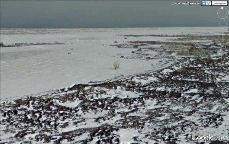 STREET VIEW : Les animaux - Page 9 Ours110