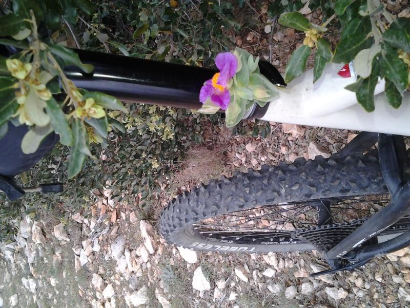 Petit jardinage avec madame c matin 2014-018