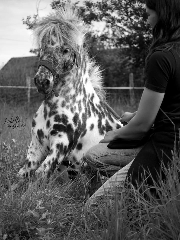 saillie sam, cheval miniature appaloosa leopard :) Sam310