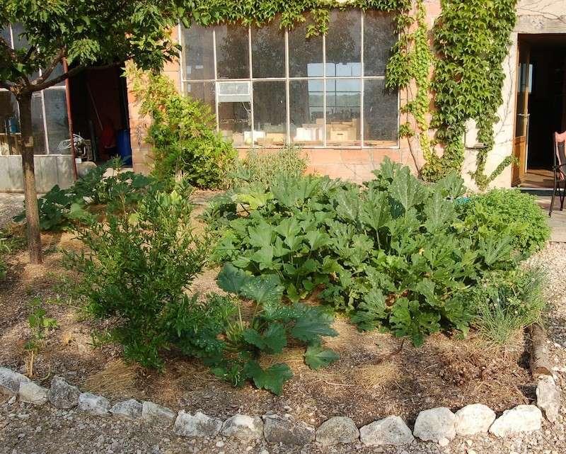 Jardinage en tout genre Courge10