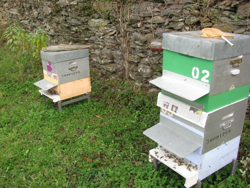 Réunion de deux ruches Img_6920