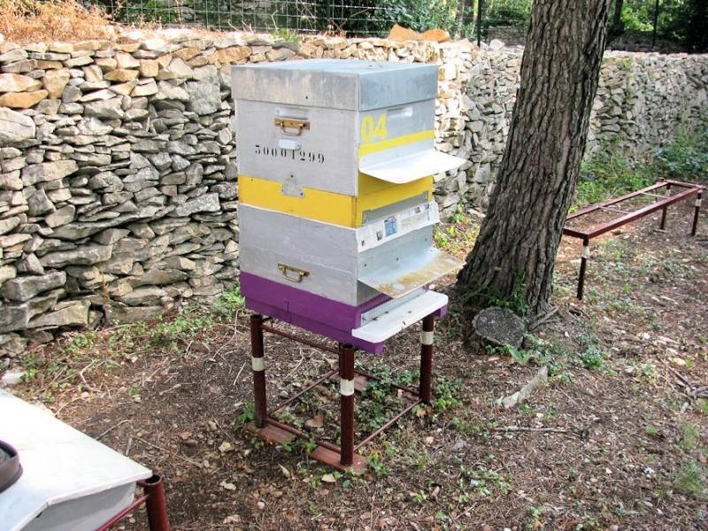 Réunion de deux ruches Reunio10