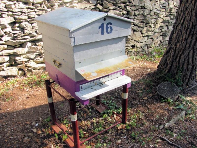 Réunion de deux ruches Reunio12