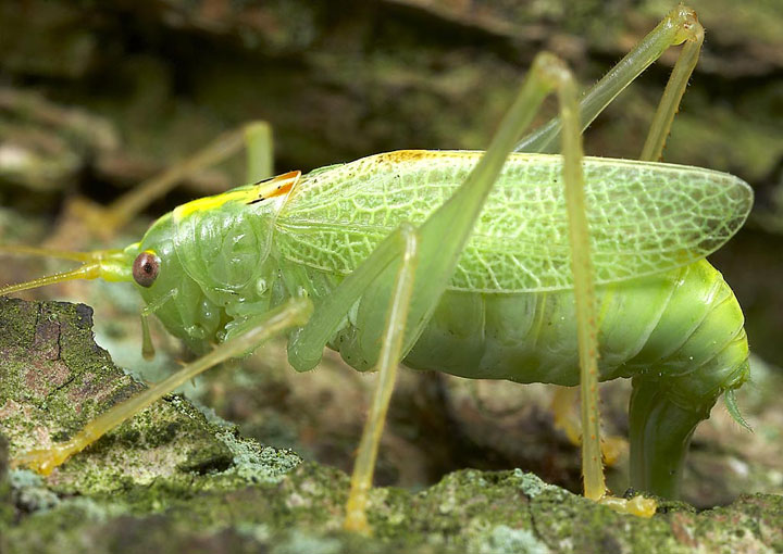 d'effroyables parasites qui prennent contrôle du corps de leur hôte pour accomplir leur sombre dessein 12-eff12