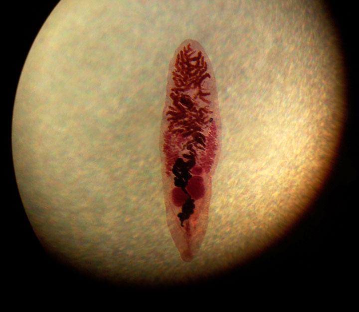 d'effroyables parasites qui prennent contrôle du corps de leur hôte pour accomplir leur sombre dessein 12-eff17
