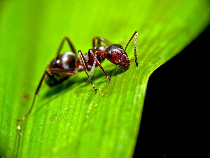 d'effroyables parasites qui prennent contrôle du corps de leur hôte pour accomplir leur sombre dessein 12-eff19