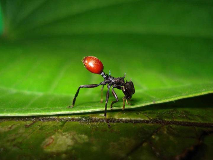 d'effroyables parasites qui prennent contrôle du corps de leur hôte pour accomplir leur sombre dessein 12-eff20
