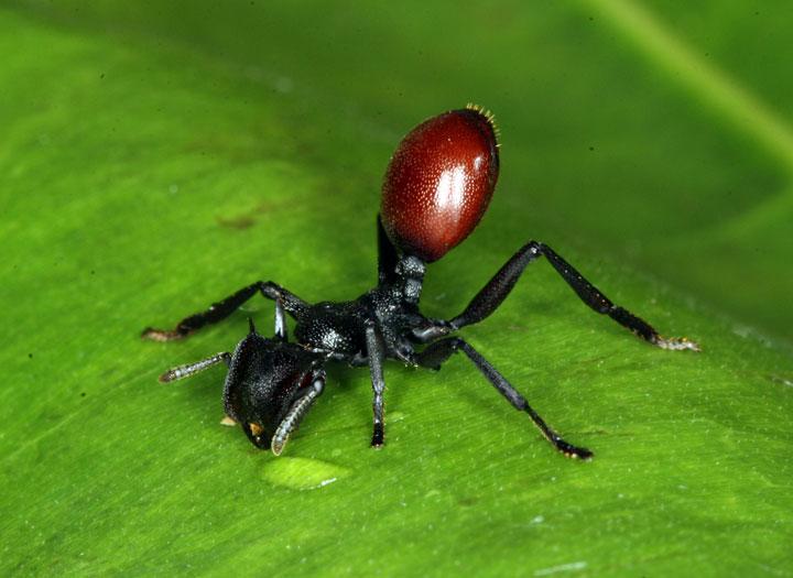 d'effroyables parasites qui prennent contrôle du corps de leur hôte pour accomplir leur sombre dessein 12-eff21
