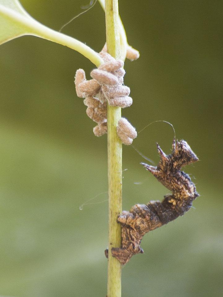 d'effroyables parasites qui prennent contrôle du corps de leur hôte pour accomplir leur sombre dessein 12-eff28