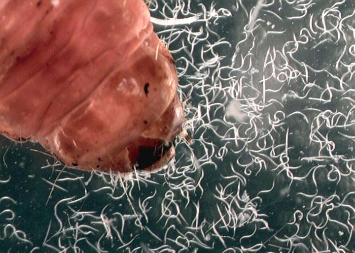 d'effroyables parasites qui prennent contrôle du corps de leur hôte pour accomplir leur sombre dessein 12-eff31