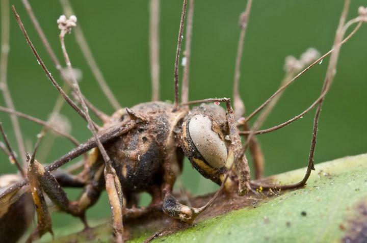 d'effroyables parasites qui prennent contrôle du corps de leur hôte pour accomplir leur sombre dessein 12-eff33