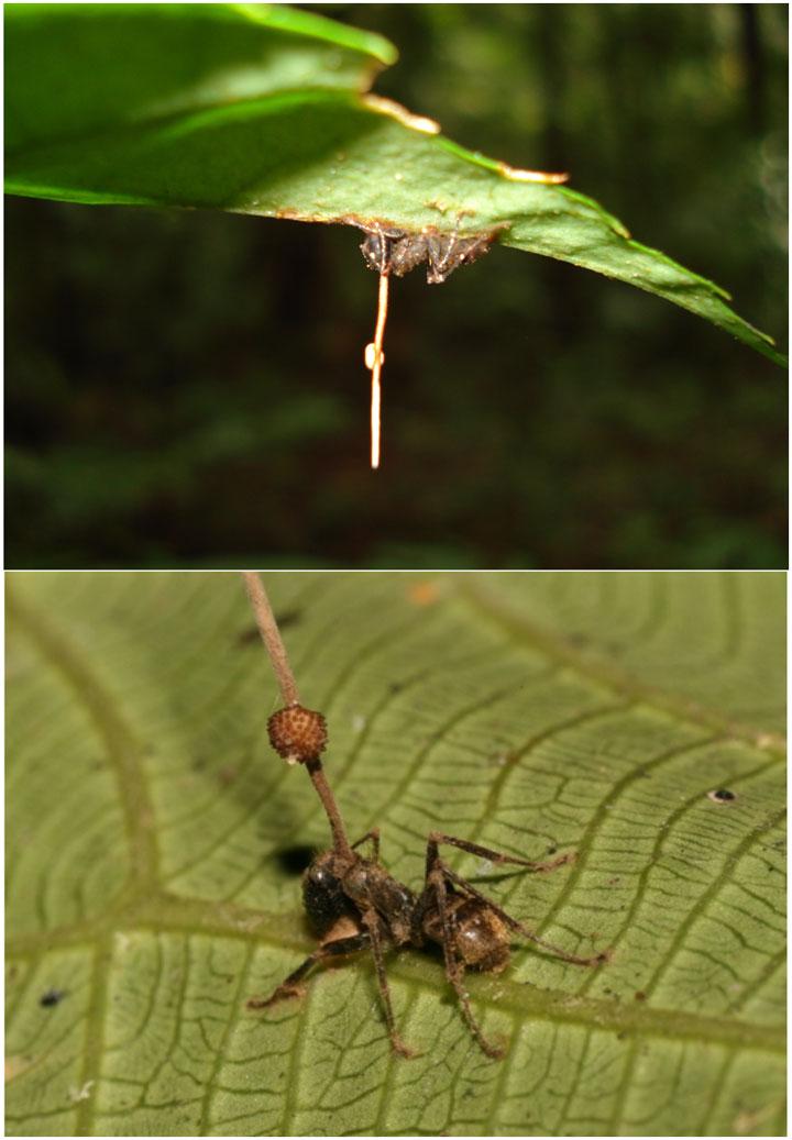 d'effroyables parasites qui prennent contrôle du corps de leur hôte pour accomplir leur sombre dessein 12-eff35