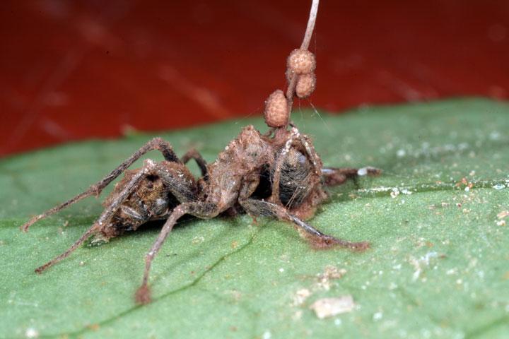 d'effroyables parasites qui prennent contrôle du corps de leur hôte pour accomplir leur sombre dessein 12-eff36