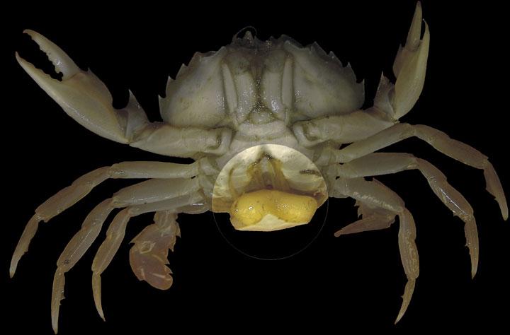 d'effroyables parasites qui prennent contrôle du corps de leur hôte pour accomplir leur sombre dessein 12-eff37