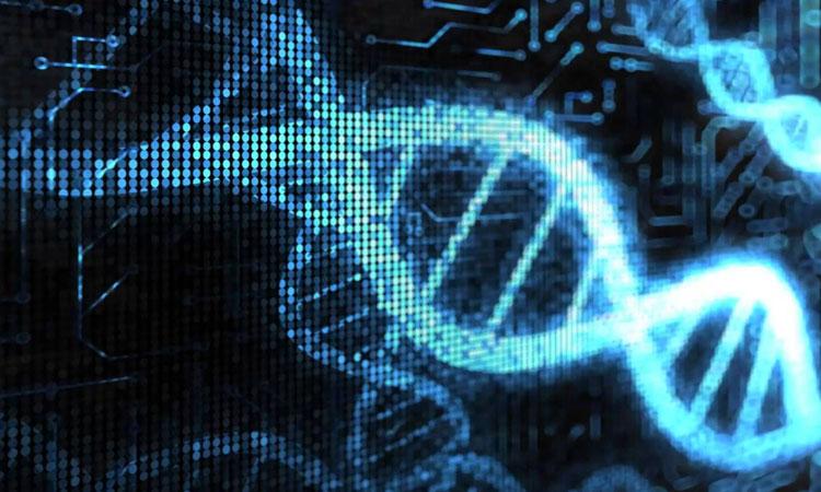 Des scientifiques sont parvenus à synthétiser un ADN inédit pour créer une nouvelle forme de vie Adn-sy10