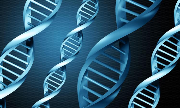 En modifiant un seul de vos gènes, votre espérance de vie peut augmenter de 20% En-mod10