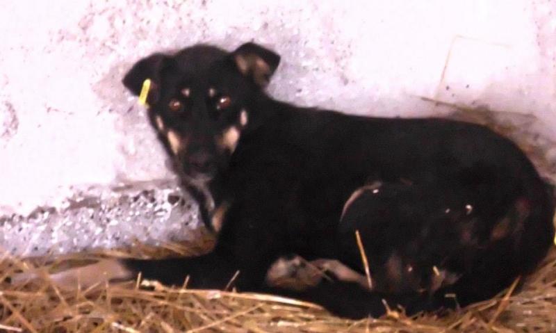 MAHJONG, F-X, taille moyenne, née 2011 (Pascani/LUCIAN) - En FA chez Elfina31 (Départ82) 13749110