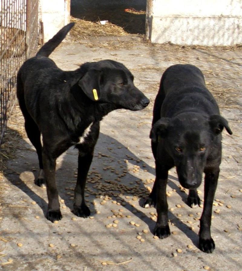 CASPER - Mâle croisé de taille moyenne, né environ octobre 2009 (PASCANI) - adopté par Marie-Blanche (57) 15575210