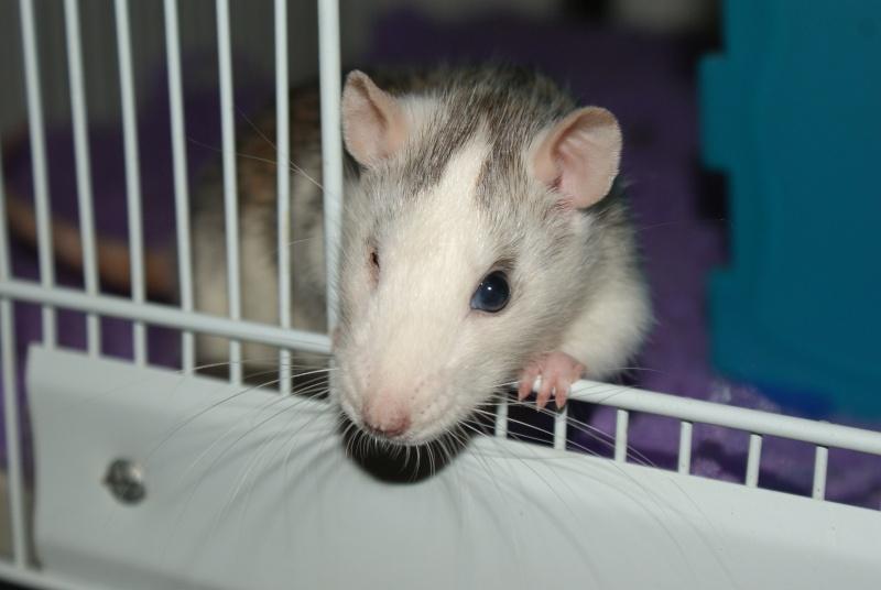 Lisa et ses 7 ratons Dsc01630
